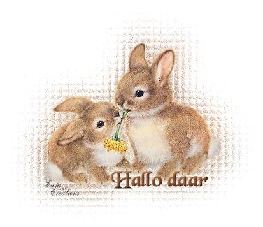 konijnen.jpg