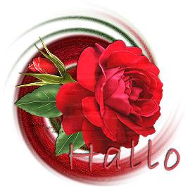 roos-rood.jpg